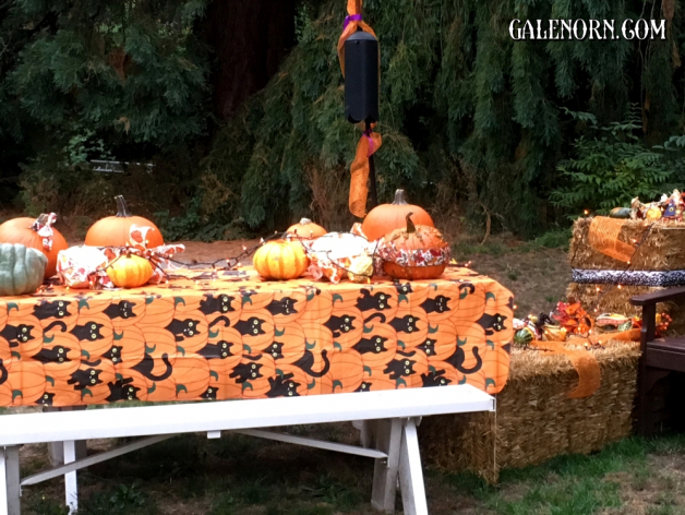Pumpkinscape: Pumpkins on a picnic table covered with a Halloween-ish tablecloth.