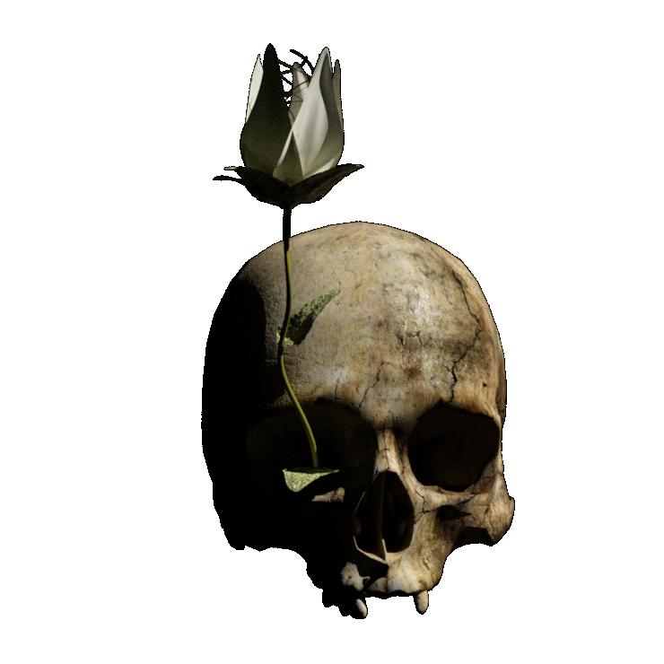 logo crâne fleur Marie d'Anjou