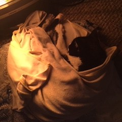 Pigs in a blanket?