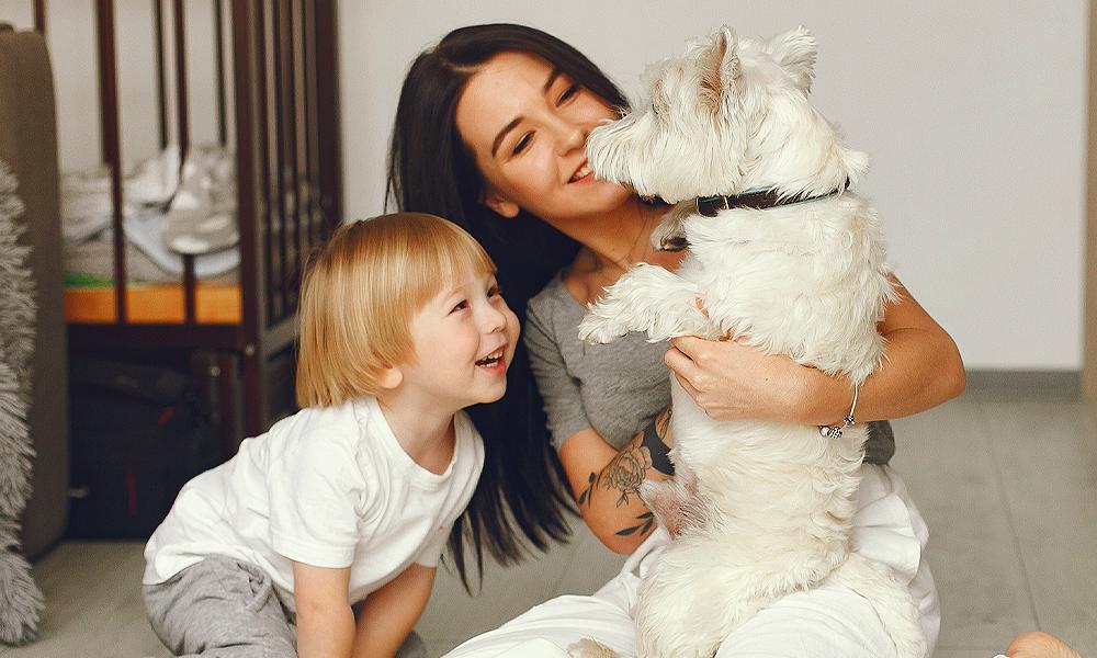 As vantagens que um cãopanheiro podem trazer para você e sua família!
