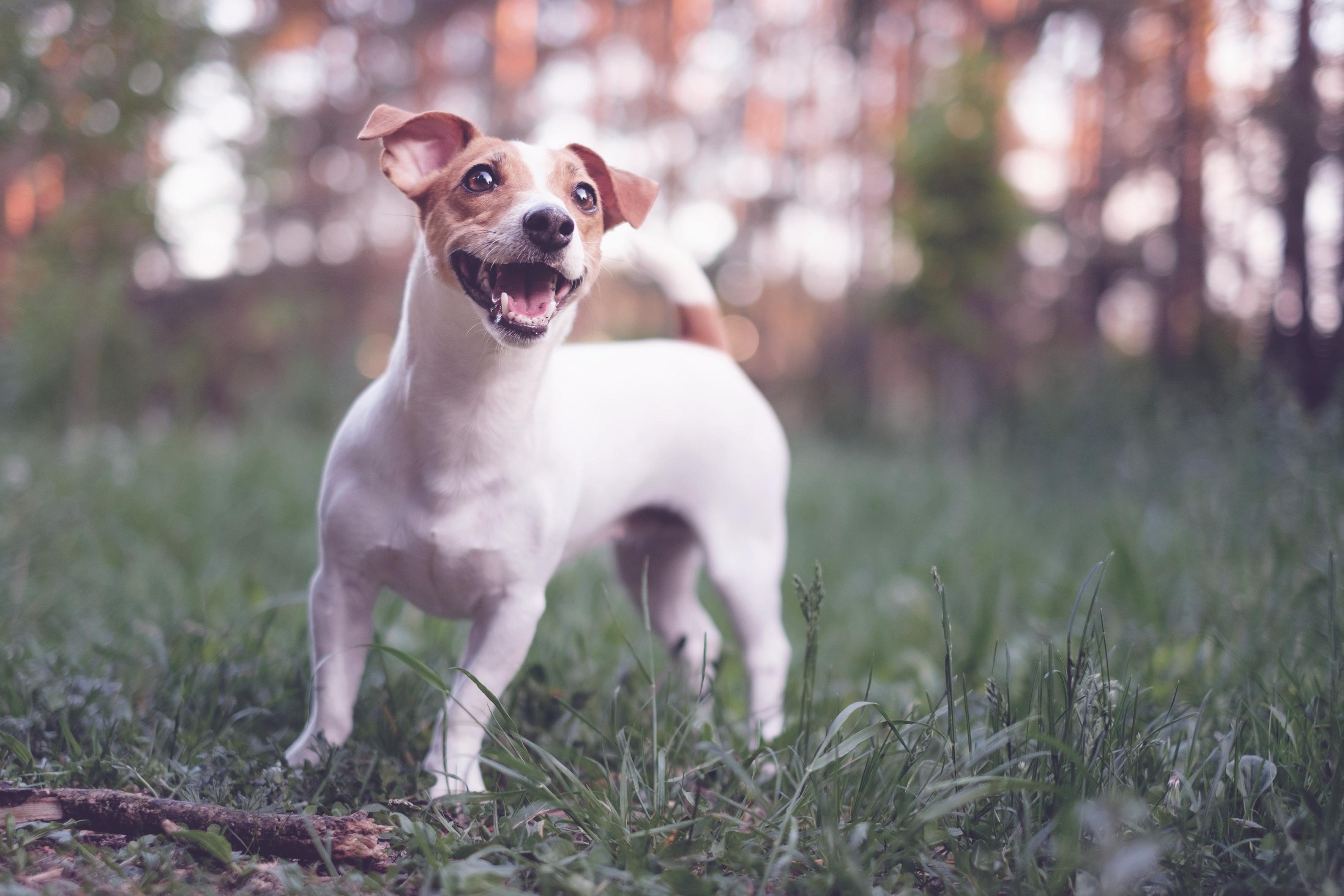 Como garantir a felicidade do meu melhor amigo?