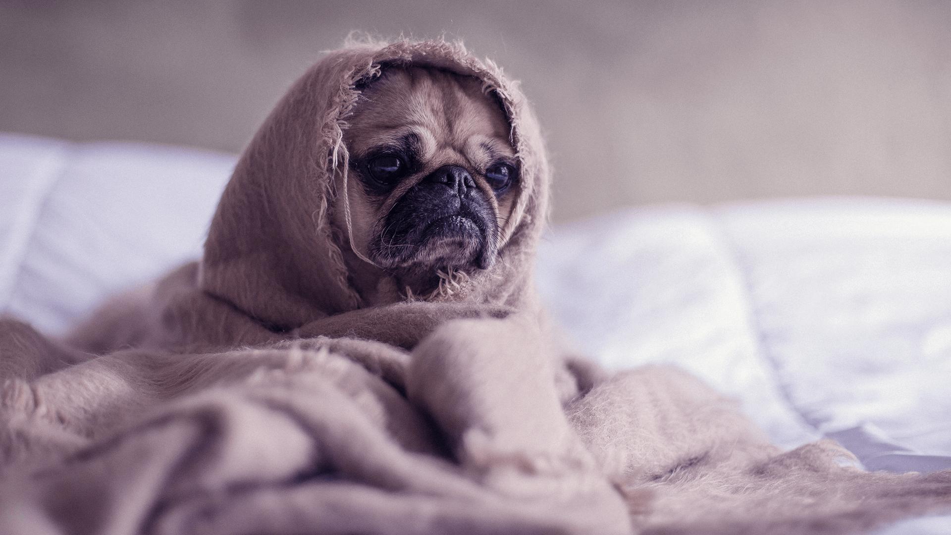Chegou o frio… E agora?