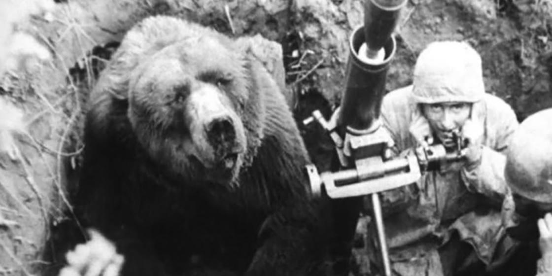 foto de Wojtek el soldado oso pardo polaco