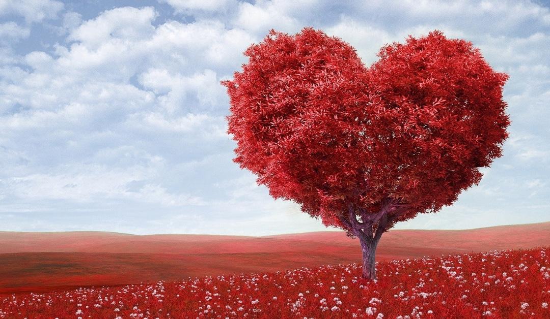 Foto Zin van Zingen: Boom met rode blaadjes in de vorm van een hartje