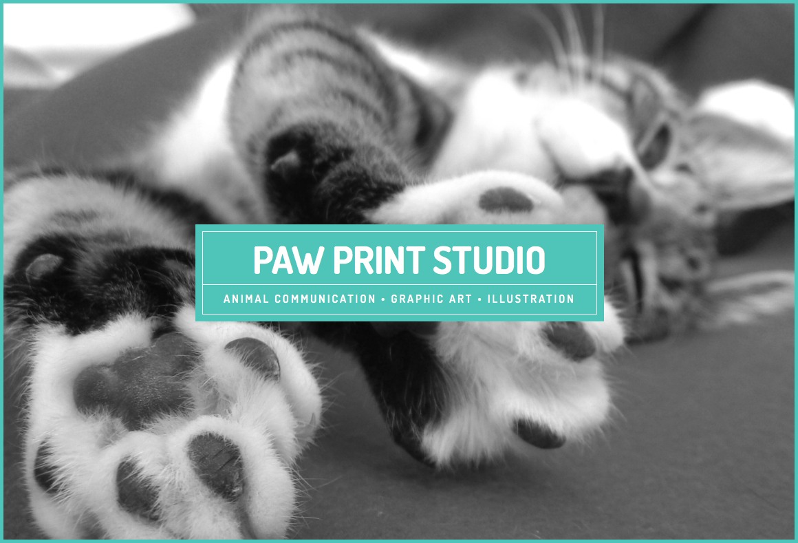 cats, paws, animals, art, drawing