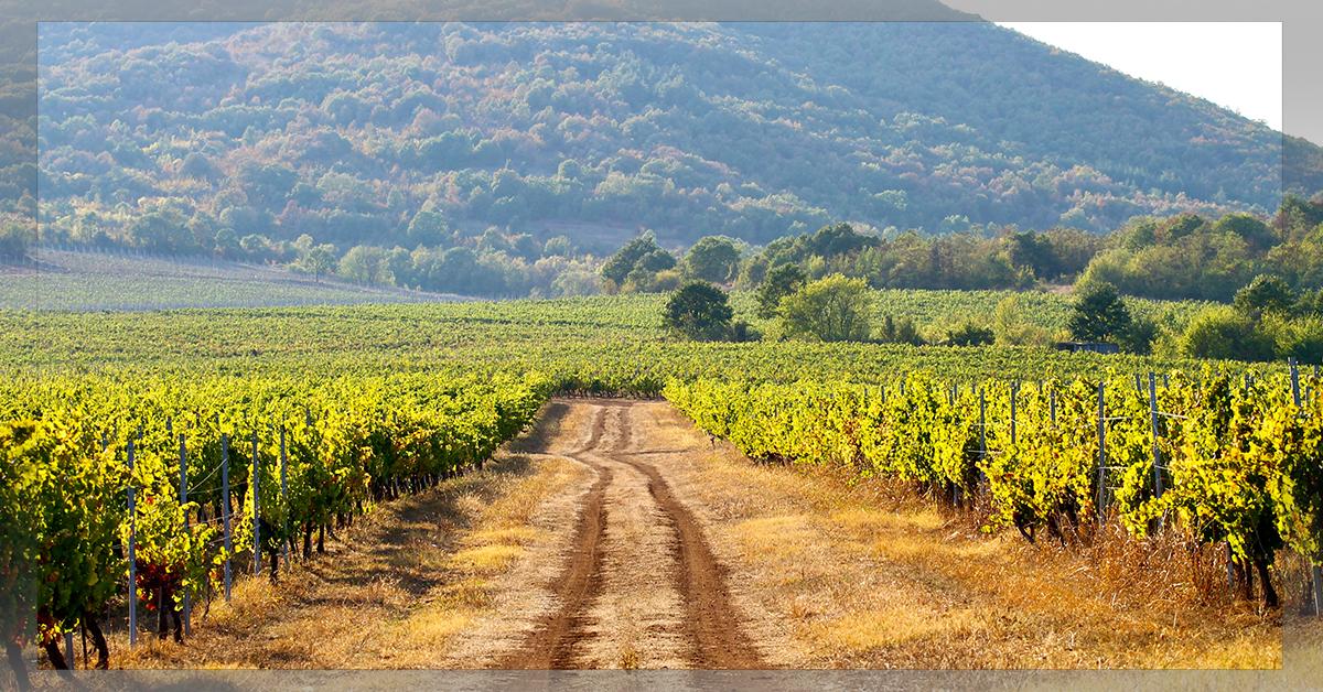 Midalidare Karaliets Vineyard