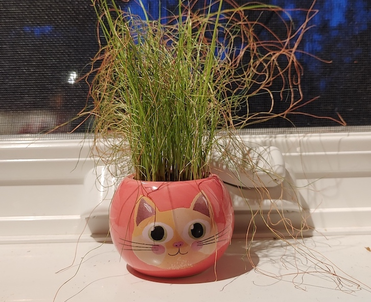 Image of a small ceramic pot with a cat face on it and dried grass growing out of it