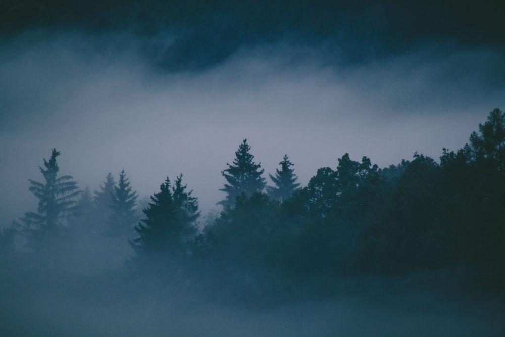 Ominous-looking woods shrouded in mist (image © Unsplash)