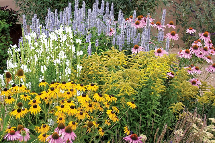 Flower Chick's Favorite Perennials for Zone 5