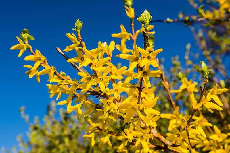 FlowerChick.com raised bed gardening https://www.avantlink.com/click.php?tt=cl&merchant_id=737d05d7-ed69-4463-800c-c07e6f509eb5&website_id=c34e431e-fcc0-4742-969e-766fb6fbfcad&url=https%3A%2F%2Feartheasy.com%2Fyard-garden%2Fraised-garden-beds%2F