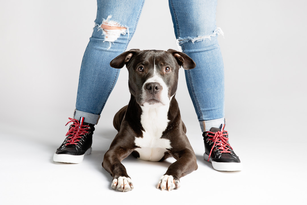 dog photography in sioux falls pitbull with owner