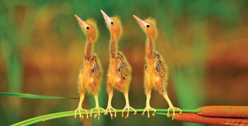 Three very cute baby birds on branch