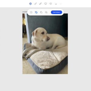 Using Facet to blur Dog