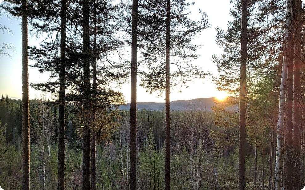 Jämtlands skogar för en växande bioekonomi - förslag till regionalt skogsprogram
