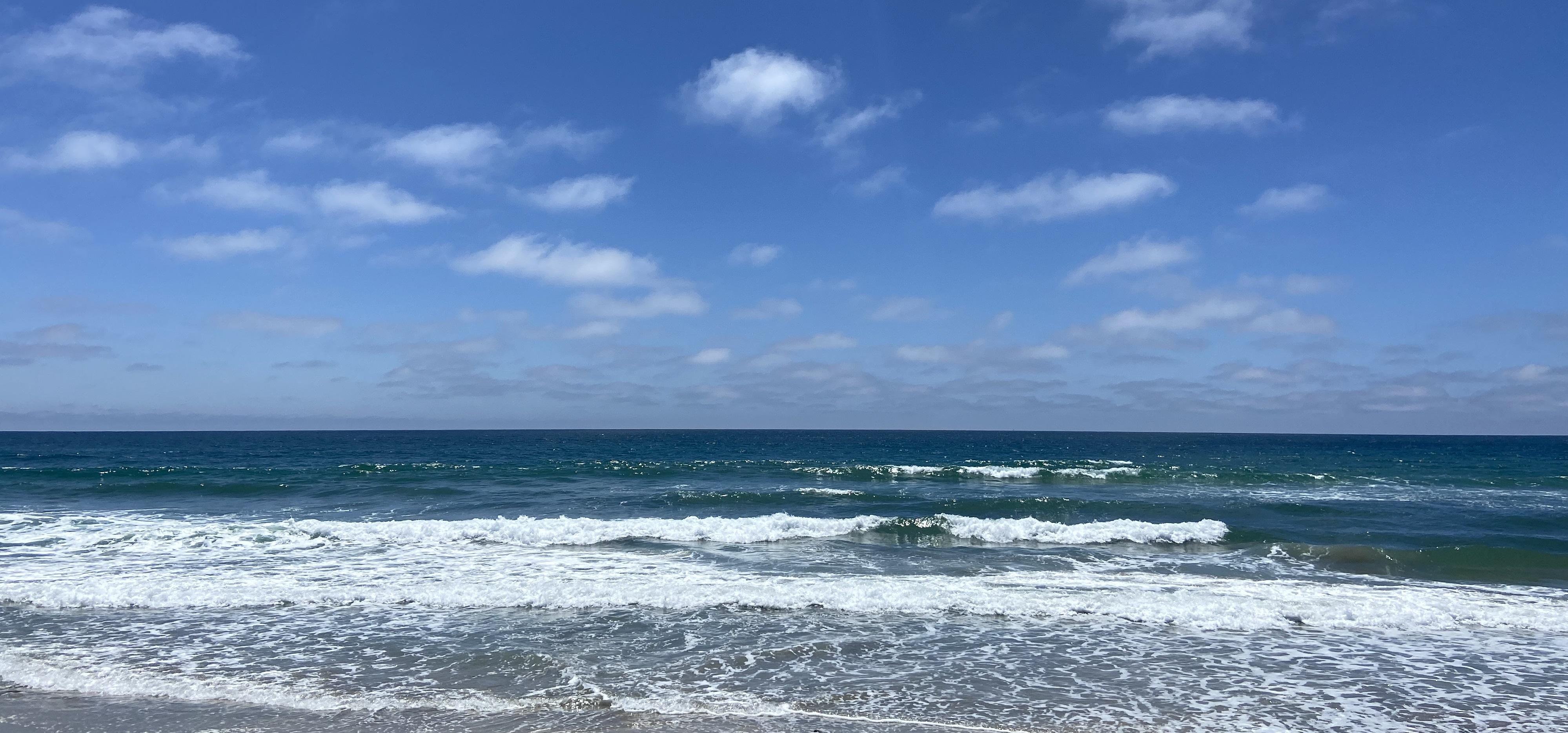 sea lions in La Jolla, California