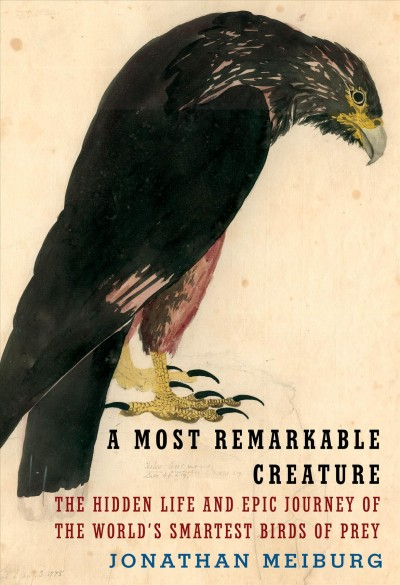 Book cover of A Most Remarkable Creature
