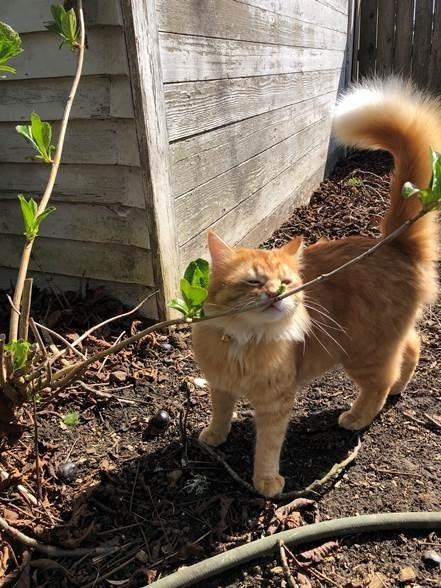 Bertie the cat walks outside