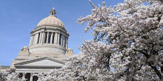 capitol building in olympia washington with cherry blossoms in bloom