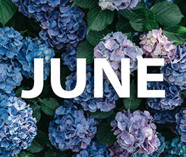 Hydrangea flowers with text that says June