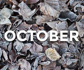 The word October in front of frozen leaves