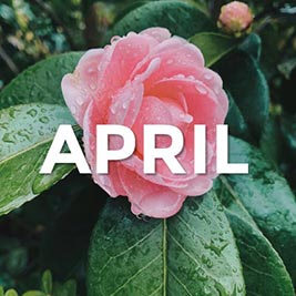 flower covered in raindrops with the word april
