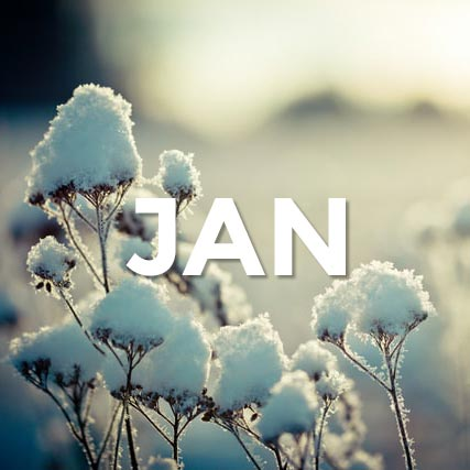 The word January in front of snow covered flowers