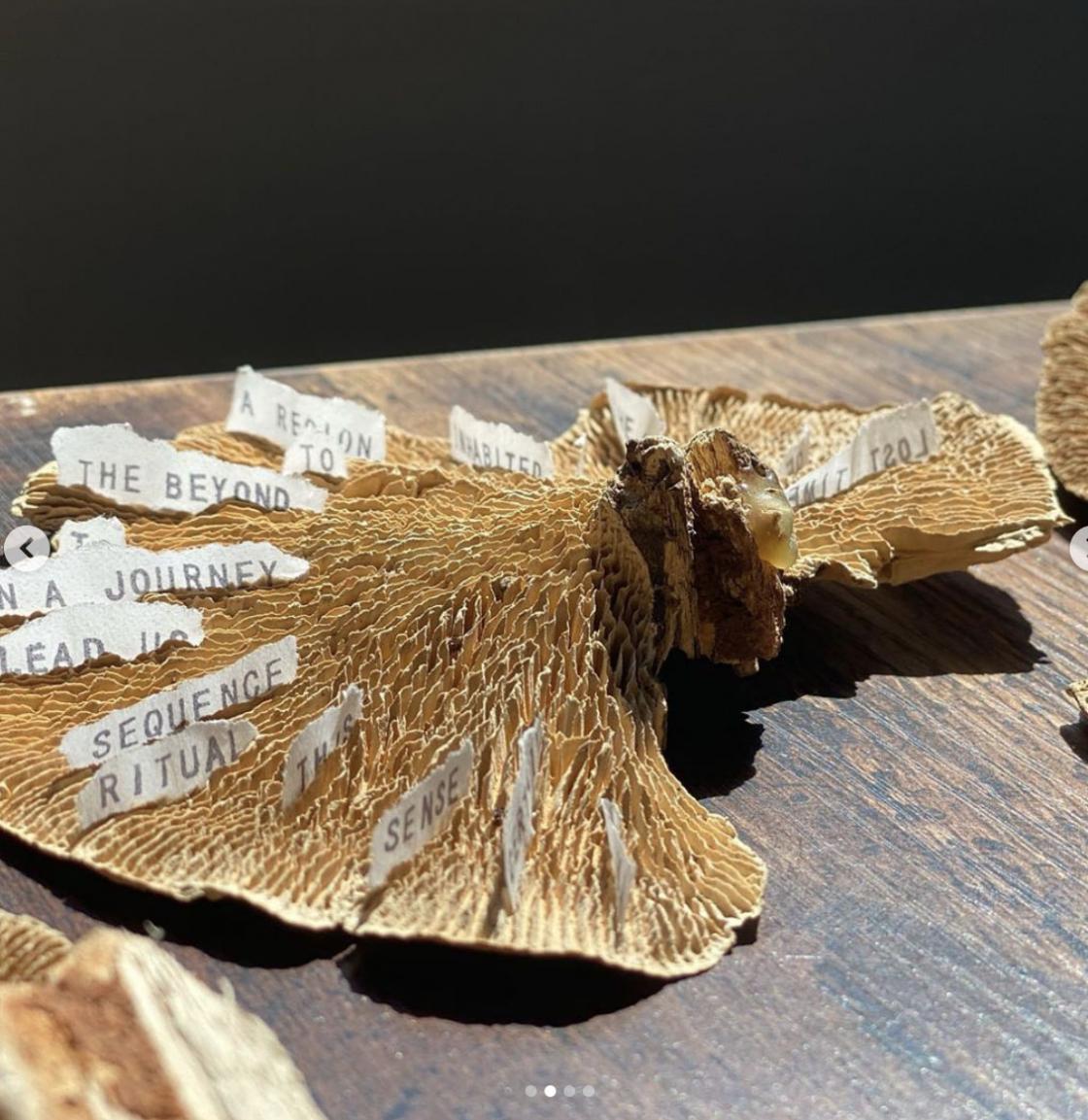 Mushroom art installation by Nung-hsin Hu