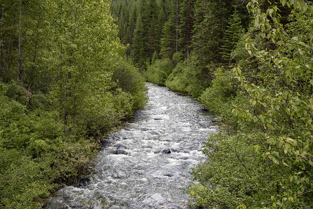 Toward the headwaters of the St. Joe River Idaho