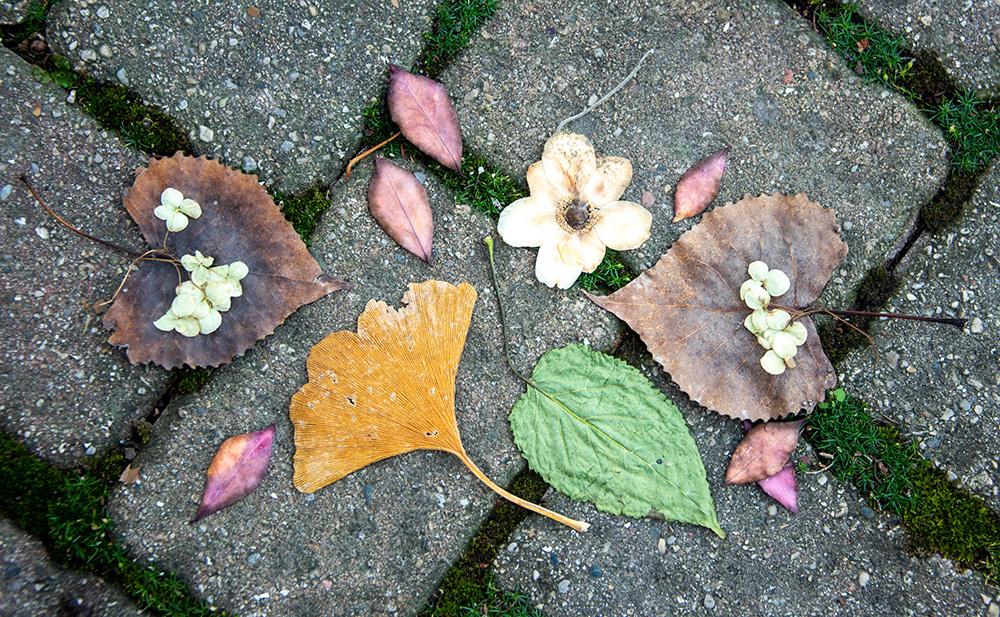 leaves on brick DJ Lee witness wilderness