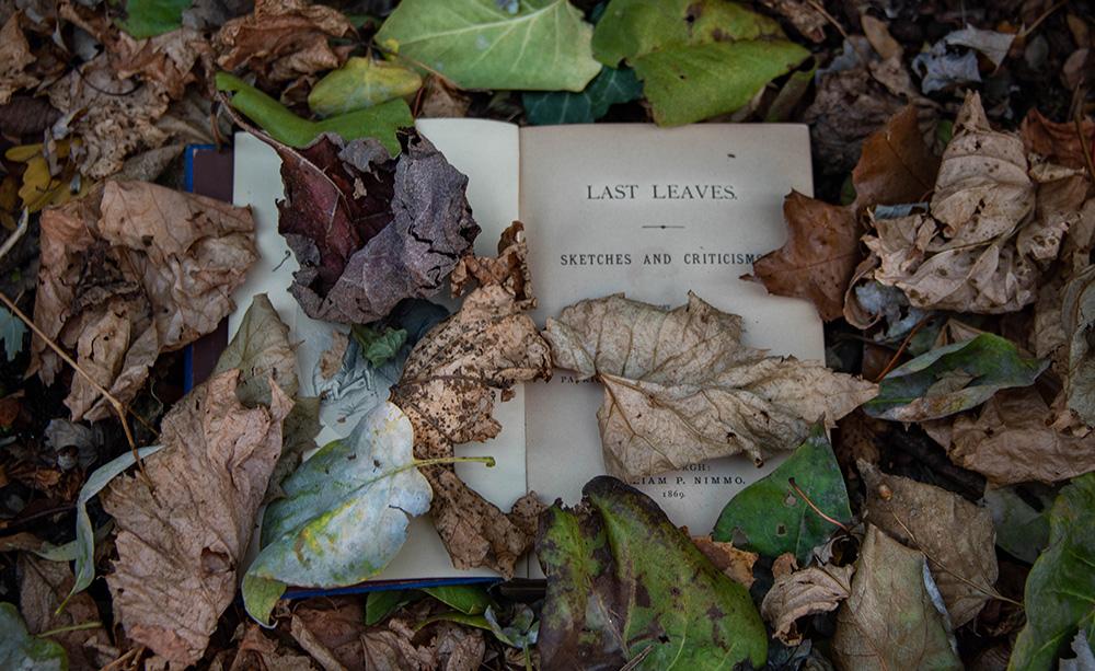 leaves on book DJ Lee witness wilderness