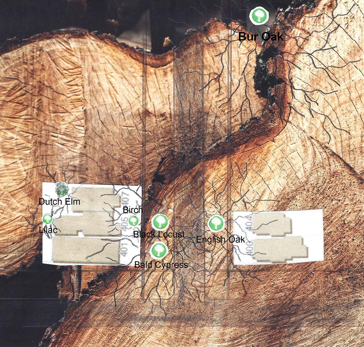Tree map of one neighborhood in Oak Park, Illinois   DJ Lee witness wilderness