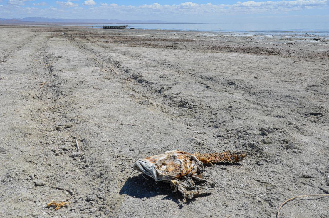 Dead fish and boat on the Salton Sea