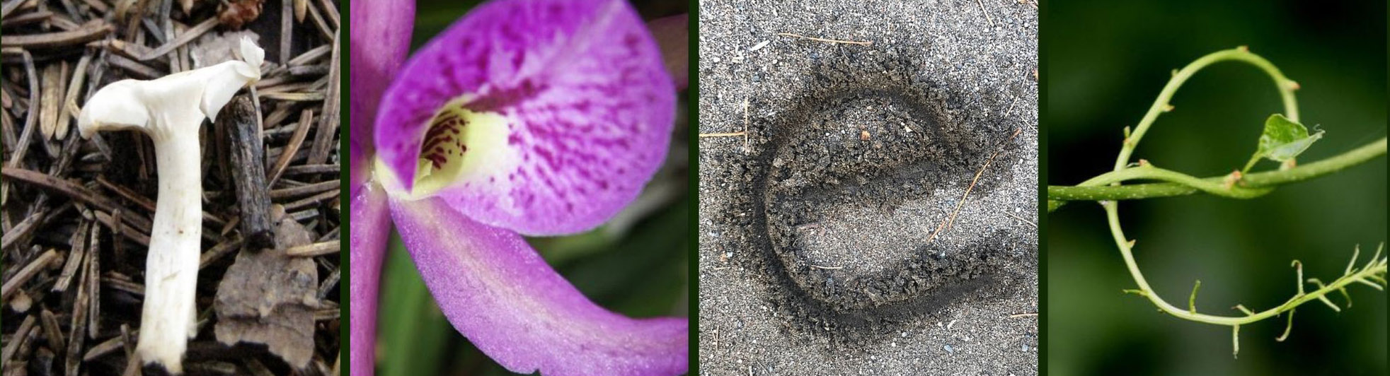 Earthwork written in letters made from nature