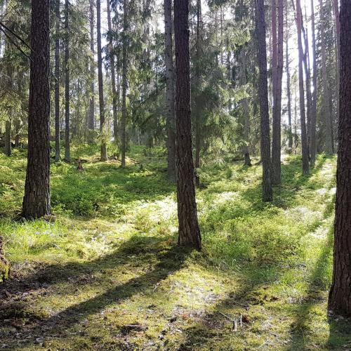Skogspromenader och naturupplevelser