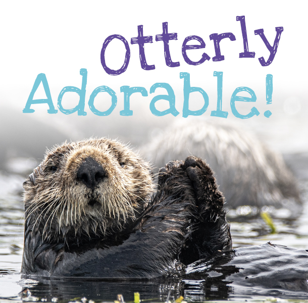 Sea Otter in water
