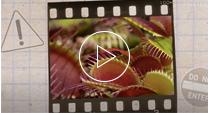 venus flytrap video thumbnail