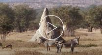Termite Video thumbnail