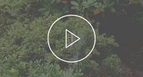Video thumbnail of orb-weaver spider
