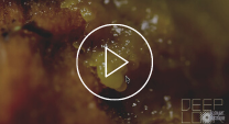 Video thumbnail of slime mould