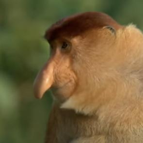 a strange looking monkey