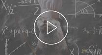 Video thumbnail of otter
