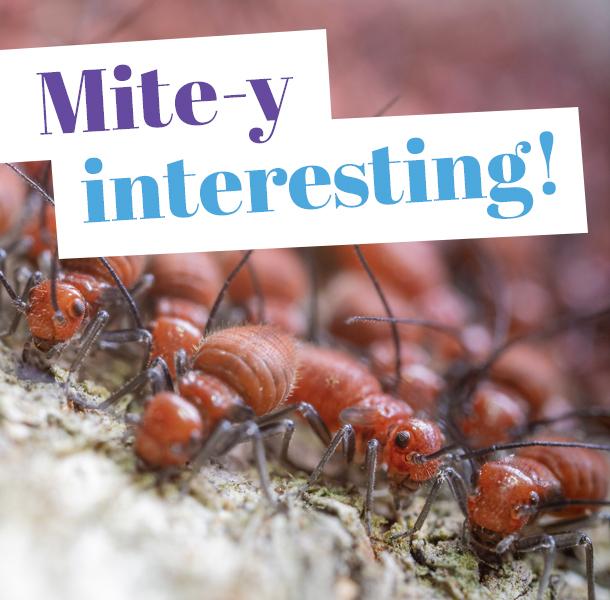 Close-up of termites