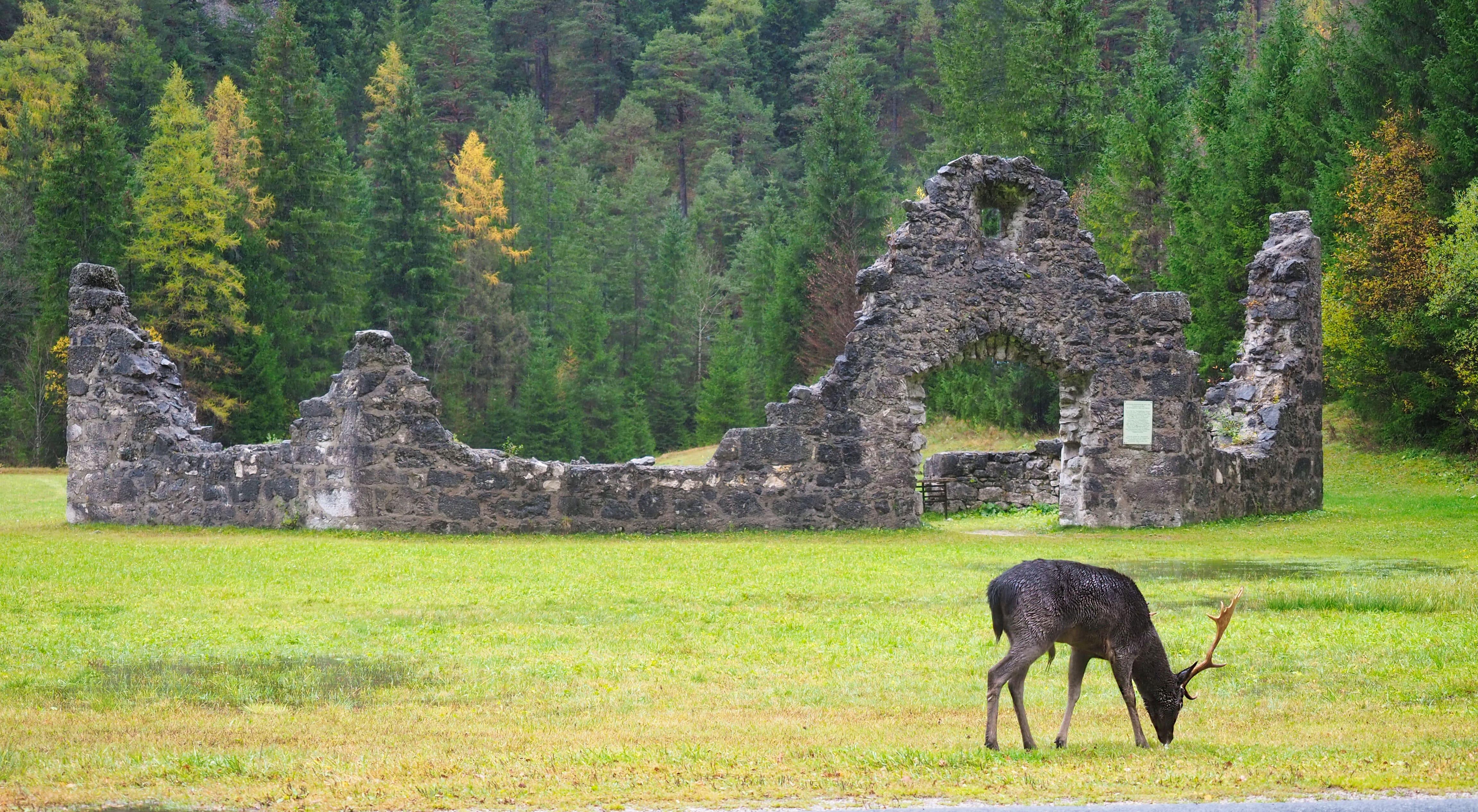 Die Porta Claudia mit einem Hirsch, direkt vor der Pension Bärenwirt