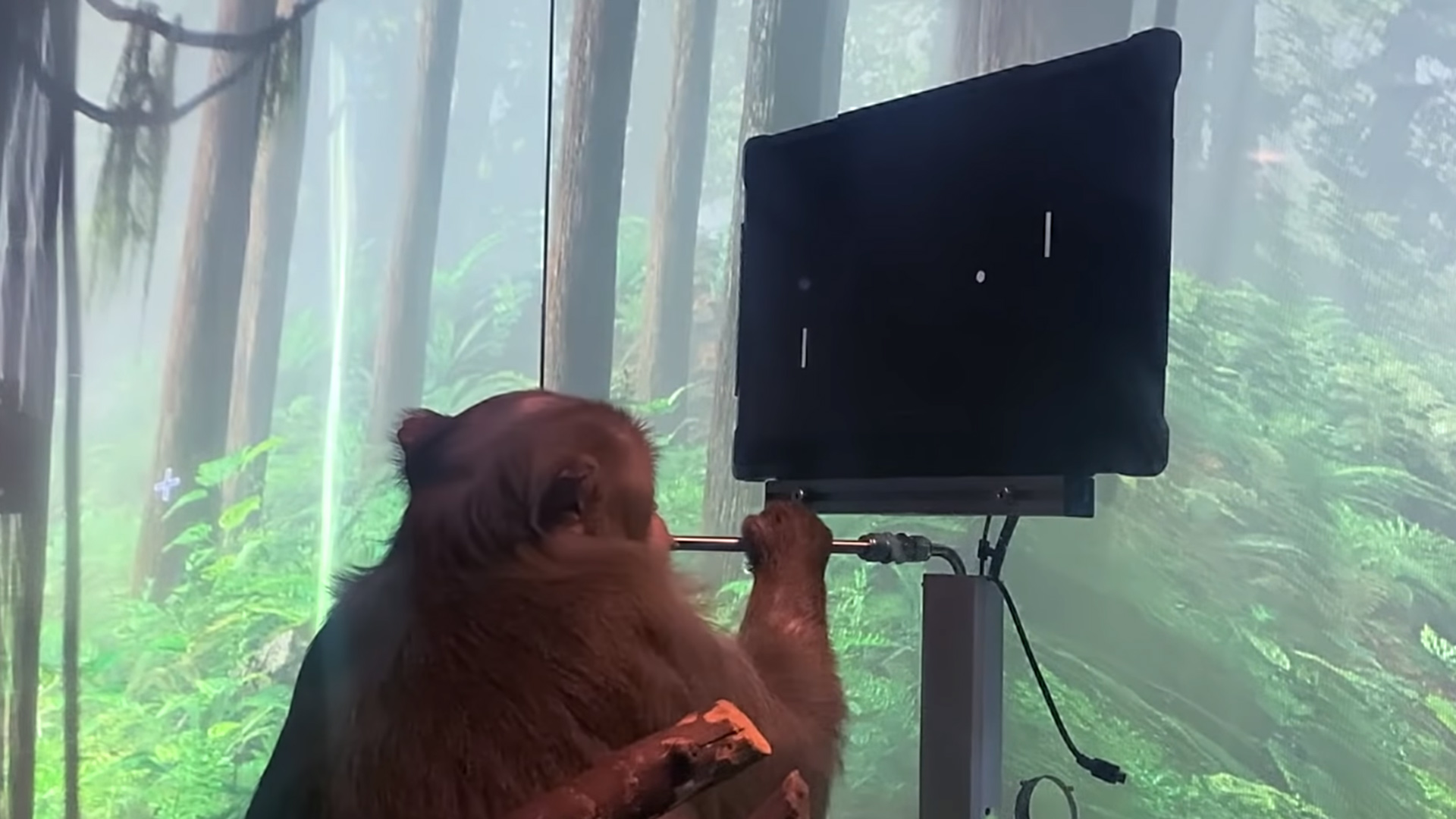 Elon Musk had a monkey learn how to play video games with its mind