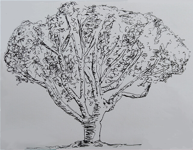 Pen drawing of a tree