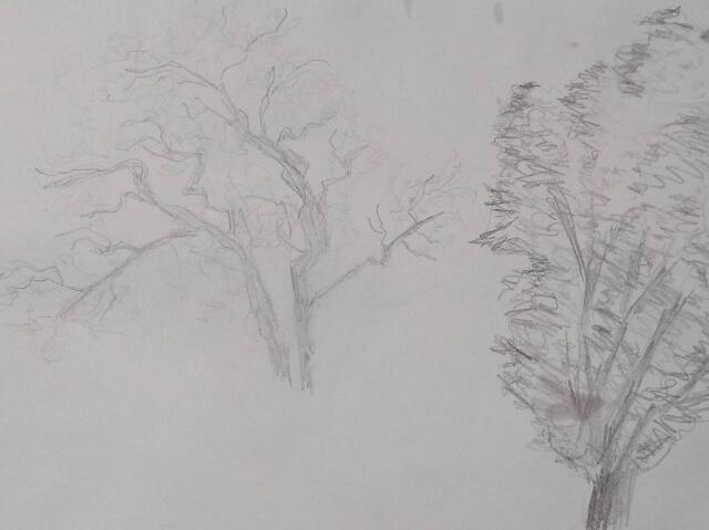 Sketch of trees at my older daughter's school