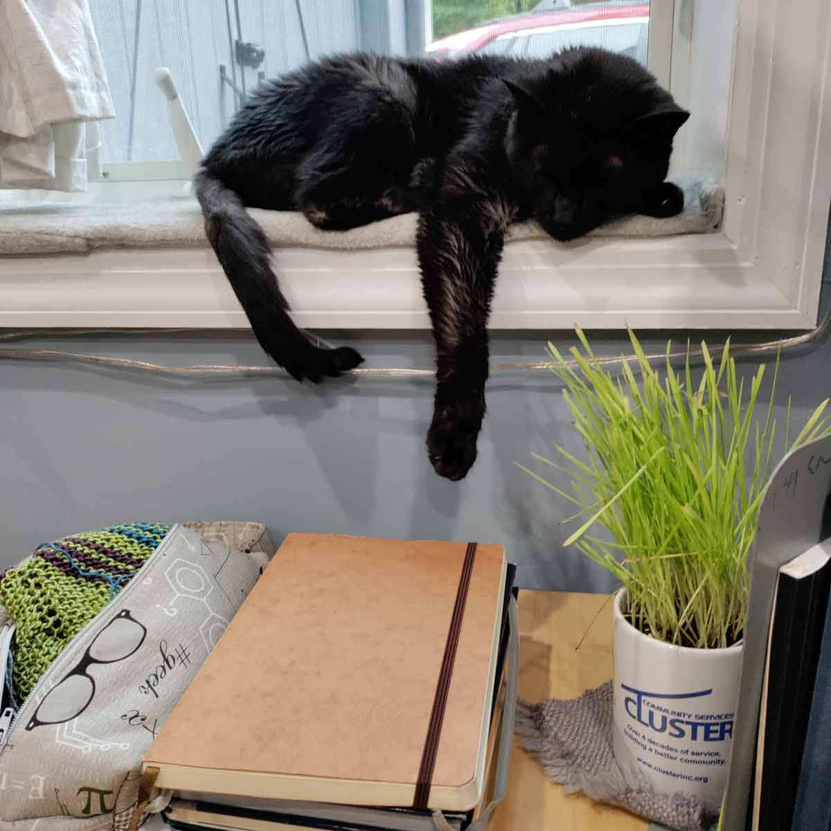 Black cat napping on a sunny windowsill. His front paw is almost melting off the edge. Below him on the desk is a pile of notebooks, a project bag with knitting sticking out, and a mug with cat grass.