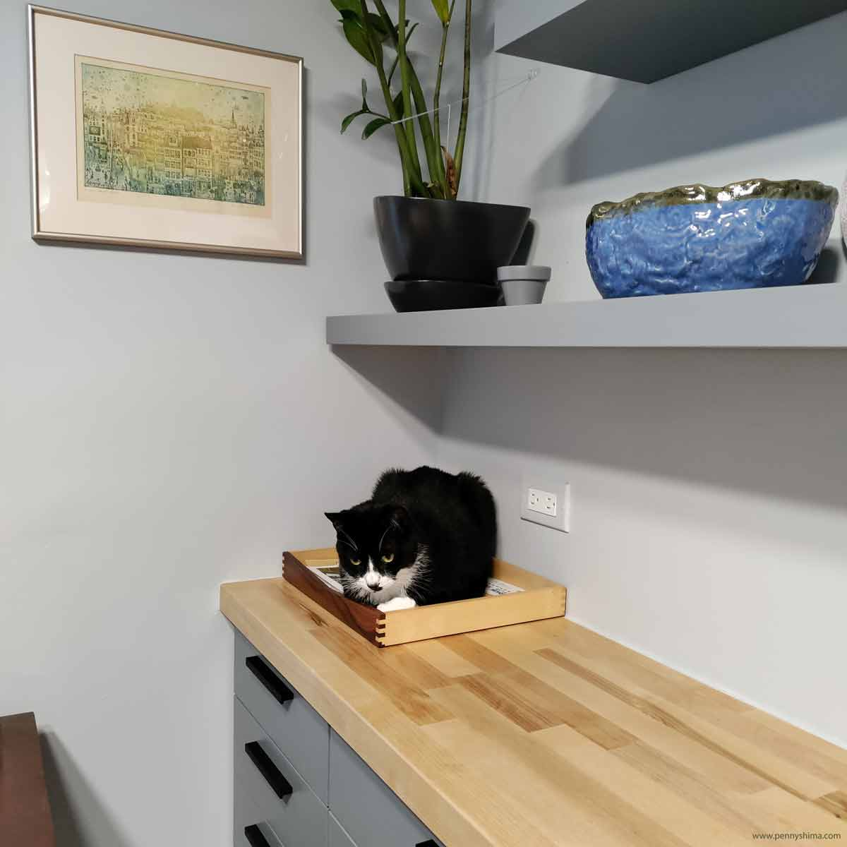 Tuxedo cat sitting in a small wooden tray on a butcher block counter. The cabinets are painted matte grey. A print by hungarian artist hangs in the background.