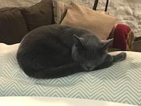 Fall back to sleep