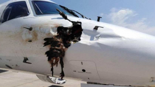 South African Airlink Embraer E135 Experiences Bird Strike